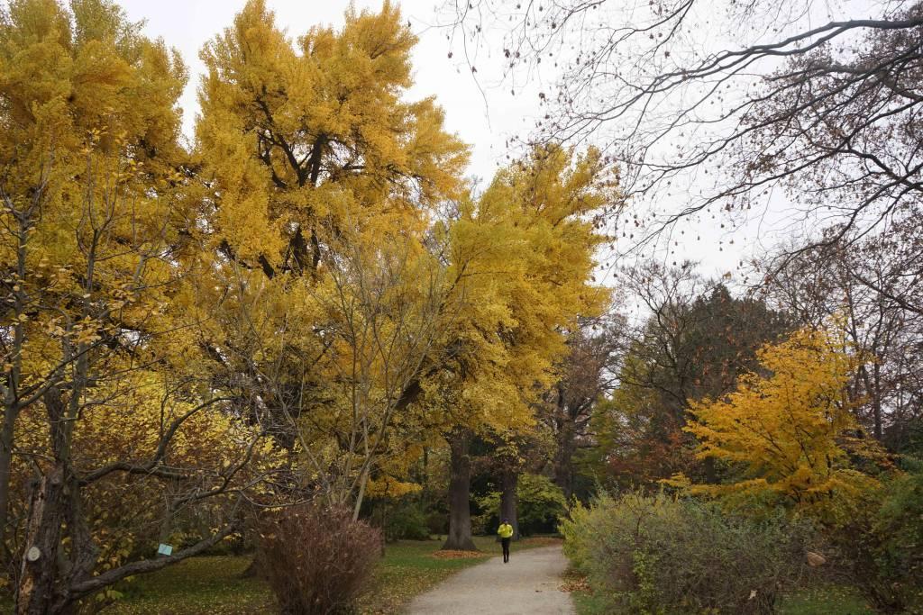 Schönbrunn botanischer Garten